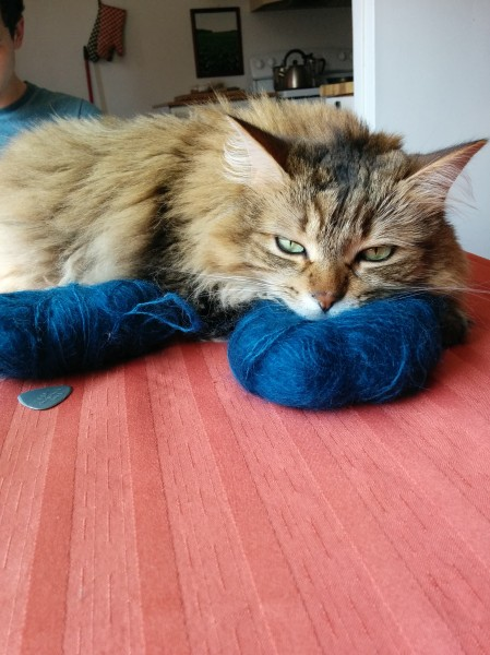 My grumpy cat Sophie using the 'mystery' mohair as a pillow